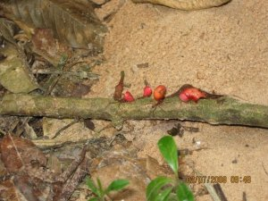 Leaf cutter ants with flowers