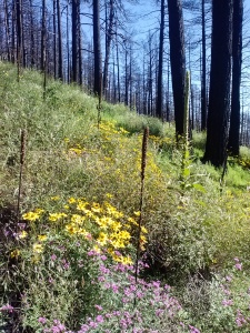 Gorgeous wildflowers along the path. Unfortunately I was sneezing the whole hike because of them :(