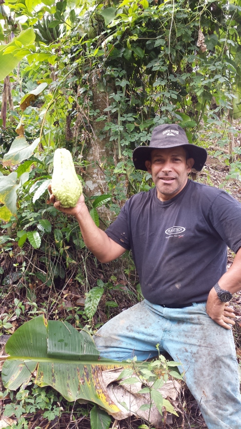 "Puerto Rican coffee farmer ""Papucho""  showing off the diversity of crops he grows on his farm"