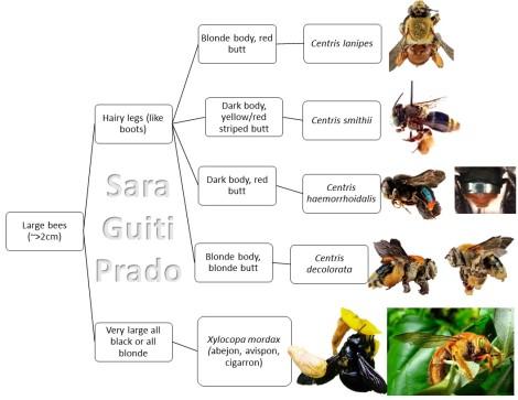 large-bee-tree